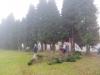 tuje-035